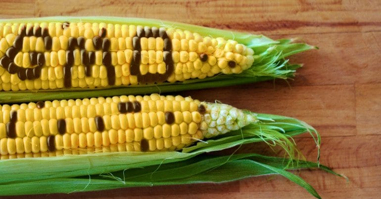 Genetically Modified Foods: Are they safe?