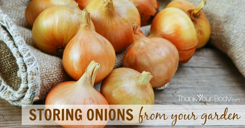 How to properly store onions from your garden. Learn the three tips for storing onions.