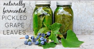 Recipe: Naturally Fermented Pickled Grape Leaves