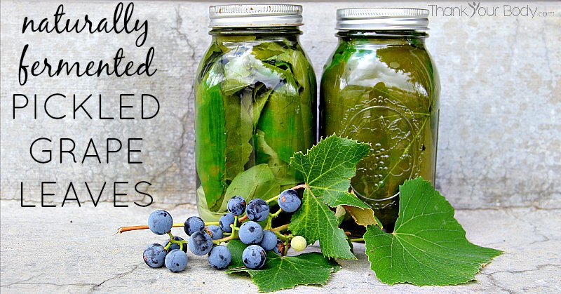 Recipe Naturally Fermented Pickled Grape Leaves