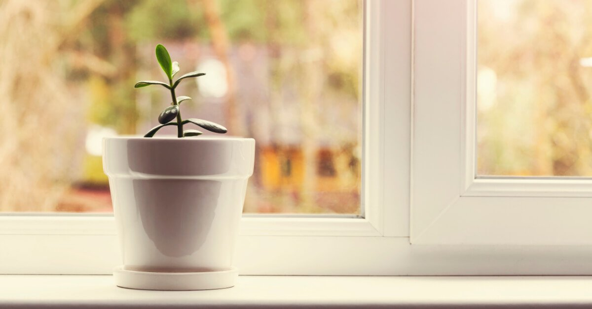 5 Easy to Grow Herbs You Should Try Growing Indoors